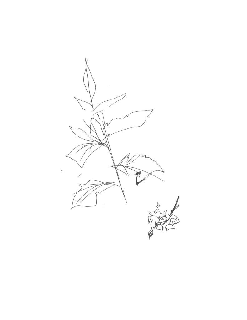 Plant print